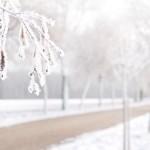Prévention des infections hivernales