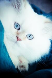 rp_kitten.jpg