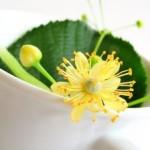 Les Plantes « minceur »