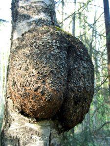 cancer-arbre