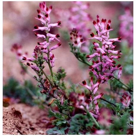plantes détoxifiantes pour l&# 39; organisme