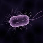 Traitement d'Helicobacter Pilori