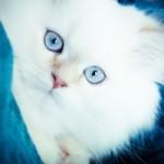 Comment soigner les yeux des chats et des chiens?