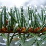 Lutter contre le froid par les médecines naturelles