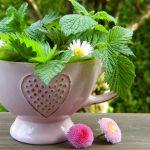Les plantes anti rides anti vieillissement